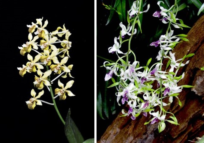 orchids (Small)
